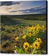 Golden Hills Canvas Print by Mike  Dawson
