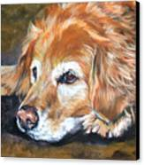 Golden Retriever Senior Canvas Print by Lee Ann Shepard