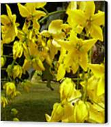 Golden Shower Tree Canvas Print by James Temple