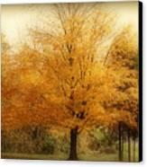 Golden Tree Canvas Print by Sandy Keeton