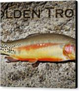 Golden Trout Canvas Print by Kelley King