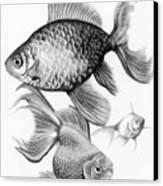 Goldfish Canvas Print by Sarah Batalka