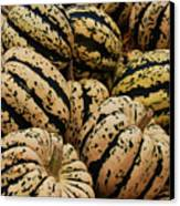 Gourds In White And Green Canvas Print by Jame Hayes