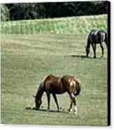 Grazing Horses Canvas Print by John Greim