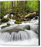Great Smoky Mountain Roaring Fork Spring Cascade Canvas Print by Mark VanDyke