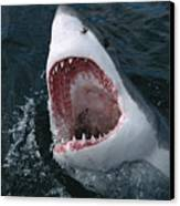 Great White Shark Jaws Canvas Print by Mike Parry