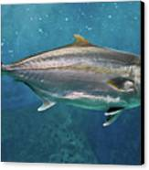 Greater Amberjack Canvas Print by Stavros Markopoulos