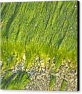 Green Algae On Rock Canvas Print by Kenneth Albin