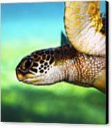 Green Sea Turtle Canvas Print by Marilyn Hunt
