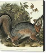 Grey Fox Canvas Print by John James Audubon