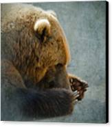 Grizzly Bear Lying Down Canvas Print by Betty LaRue