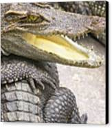 Group Of Crocodiles Canvas Print by Jorgo Photography - Wall Art Gallery