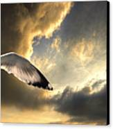 Gull With Approaching Storm Canvas Print by Meirion Matthias