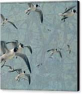 Gulls Canvas Print by James W Johnson