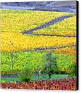 Harvest Time Canvas Print by Margaret Hood