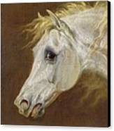 Head Of A Grey Arabian Horse  Canvas Print by Martin Theodore Ward