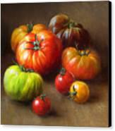 Heirloom Tomatoes Canvas Print by Robert Papp