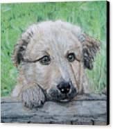 Hello Puppy Canvas Print by Yvonne Johnstone