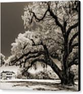 Historic Drayton Hall In Charleston South Carolina Live Oak Tree Canvas Print by Dustin K Ryan