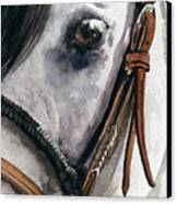 Horse Head Canvas Print by Nadi Spencer