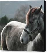 Horse Canvas Print by Saulgranda