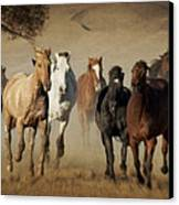 Horses Running Free Canvas Print by Heather Swan