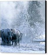 Huddled For Warmth Canvas Print by Sandra Bronstein