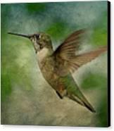 Hummingbird In Flight II Canvas Print by Sandy Keeton