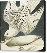 Iceland Or Jer Falcon Canvas Print by John James Audubon