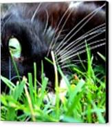 In The Grass Canvas Print by Jai Johnson