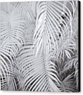 Infrared Palm Abstract Canvas Print by Adam Romanowicz