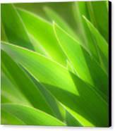 Iris Leaves Canvas Print by Utah Images
