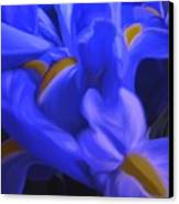 Iris Sparkle Canvas Print by Roxy Riou