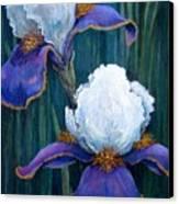 Irises Canvas Print by Tanja Ware