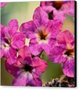 Irridescent Pink Flowers Canvas Print by Ryan Kelly