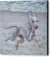 Italian Greyhound On The Beach Canvas Print by Lee Ann Shepard