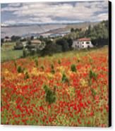 Italian Poppy Field Canvas Print by Sharon Foster