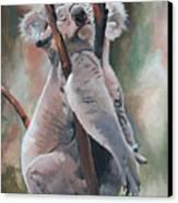Its About Trust - Koala Bear Canvas Print by Suzanne Schaefer