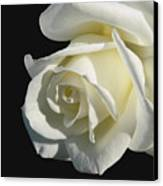 Ivory Rose Flower On Black Canvas Print by Jennie Marie Schell