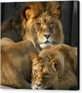 Keeping Company Canvas Print by Brian M Lumley