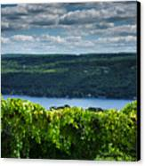 Keuka Vineyard I Canvas Print by Steven Ainsworth