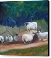 King Of Green Hill Farm Canvas Print by Donna Tuten