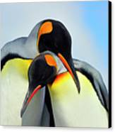 King Penguin Canvas Print by Tony Beck