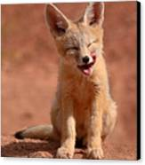 Kit Fox Pup Mid-lick Canvas Print by Max Allen