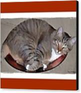 Kitty In A Bowl Canvas Print by Terry Mulligan