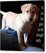 Labadore Puppy Is. 12v5 Canvas Print by Linda Phelps
