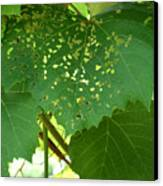 Lace In The Vines Canvas Print by Mindy Newman