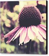 Last Summer Canvas Print by Angela Doelling AD DESIGN Photo and PhotoArt