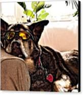 Lazy Dog Canvas Print by Jim DeLillo
