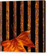 Leaf In Drain Canvas Print by Carlos Caetano